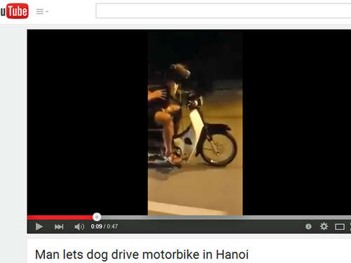 Video: Vietnamese lässt Hund sein Moped lenken
